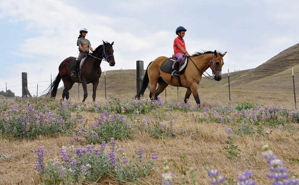 Teen Campers Take Their Horses out Along a Hilly Trail